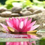 自己の本質を知るために、日常でできる3つの秘訣